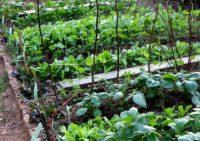 Les 5 Sens du Potager Bio