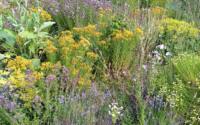 Se relier aux plantes avec Marie Fripiat à Eourres