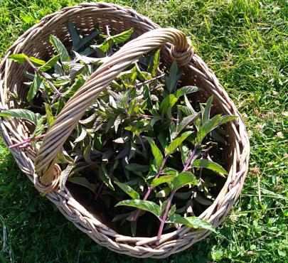 Se relier aux plantes avec Marie Fripiat à Eourres 2