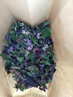 Se relier aux plantes avec Marie Fripiat à Eourres 3