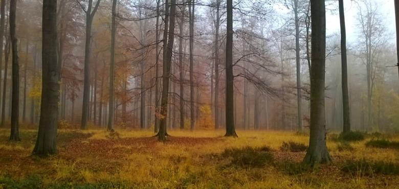 Nous immerger en forêt au cours des saisons par des marches Shinrin Yoku , la sylvothérapie japonaise, et célébrer les bienfaits de chaque cycle, c'est le thème des 4 ateliers qui vont ponctuer l'automne 2020 à l'été 2021.