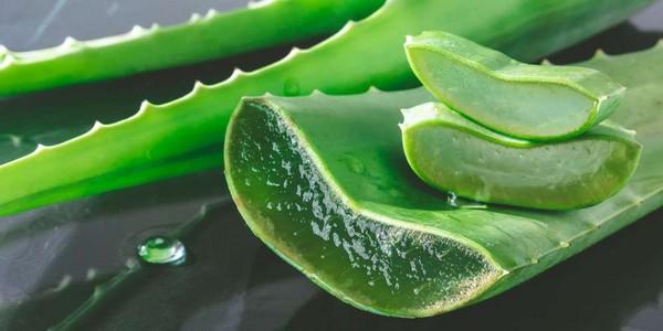 Gel hydroalcoolique à base d'aloe vera et savon liquide maison pour les mains