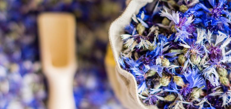 bleuet-stage d'été- plantes médicinales et comestibles