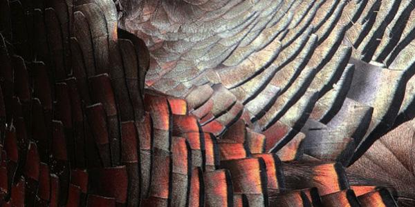 [Cycle Arbre 6/8] Arbre matière : oeuvrer avec le bois