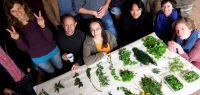 Cours de botanique - Formation permaculture